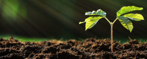 daily practices for a sustainable environment